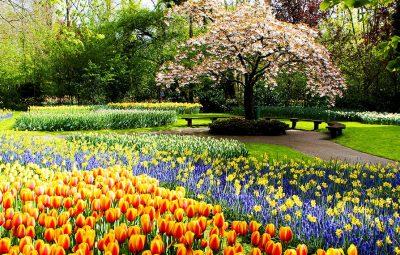 Keukenhof-Gardens_1140x570