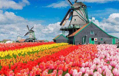 keukenhof-tulip-gardens